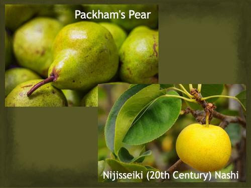 MultiPear - Packhams/20th Century