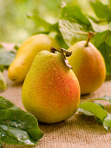 Henry's Red Longdon Perry Pear