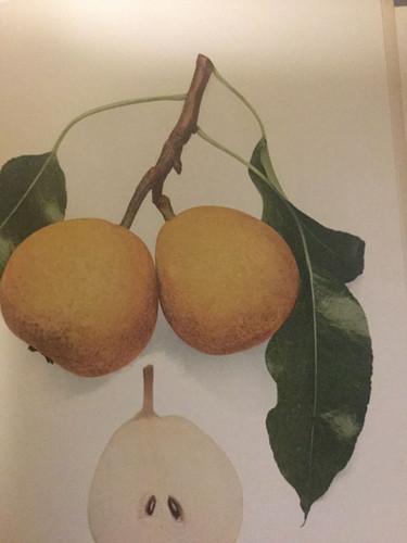 Belle Lucrative Pear