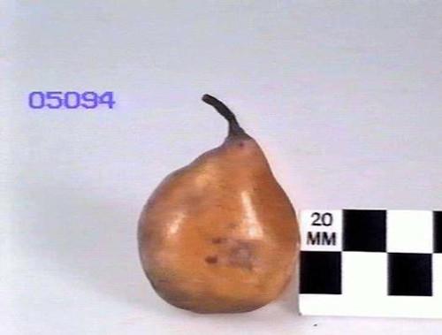 St Michael Archangel Pear