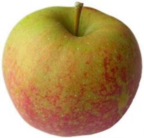 Cornish Aromatic Apple (dwarf)