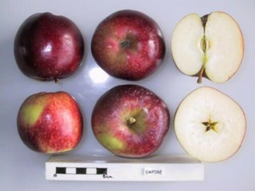 Empire Apple (dwarf)