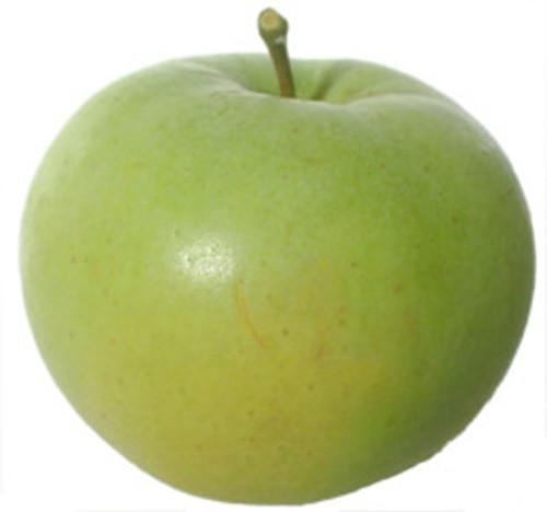 Freyberg Apple (dwarf)