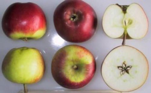 Geeveston Fanny Apple (dwarf)