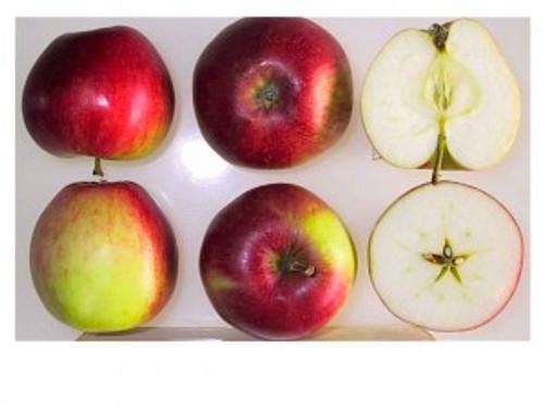 Akane Apple (medium)