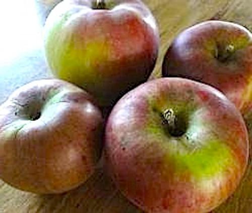Brown's Apple (medium)