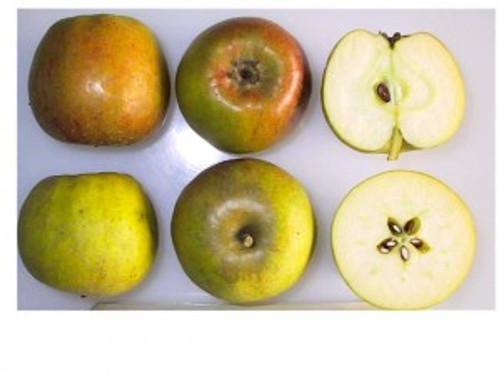 Court of Wick Apple (medium)