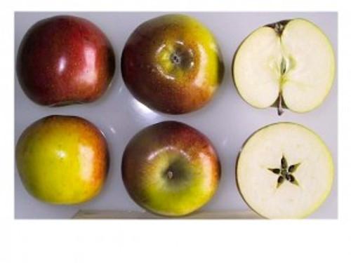 Hubbardston Nonsuch Apple (medium)