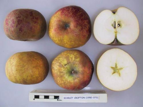 Crofton Red Apple (medium)
