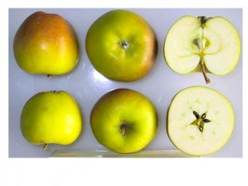Sturmer Pippin Apple (medium)