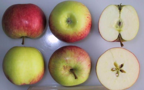 James Grieve Apple (medium)