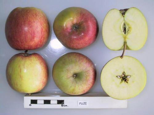 Fuji Apple (stepover)