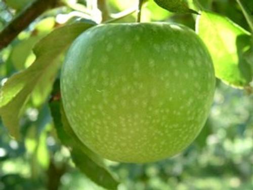 Granny Smith Apple (stepover)
