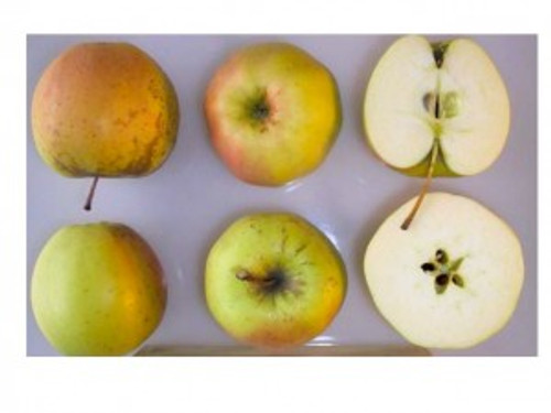 Golden Delicious Apple (tall)