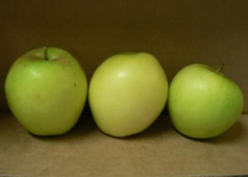Sugar-Loaf Pippin Apple (tall)