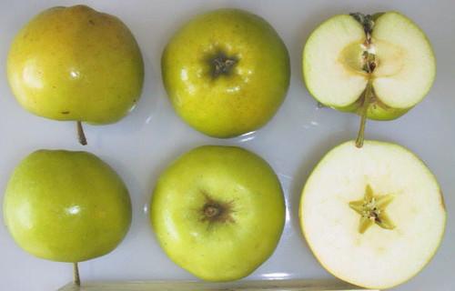 Bulmer's Norman Apple (tall)