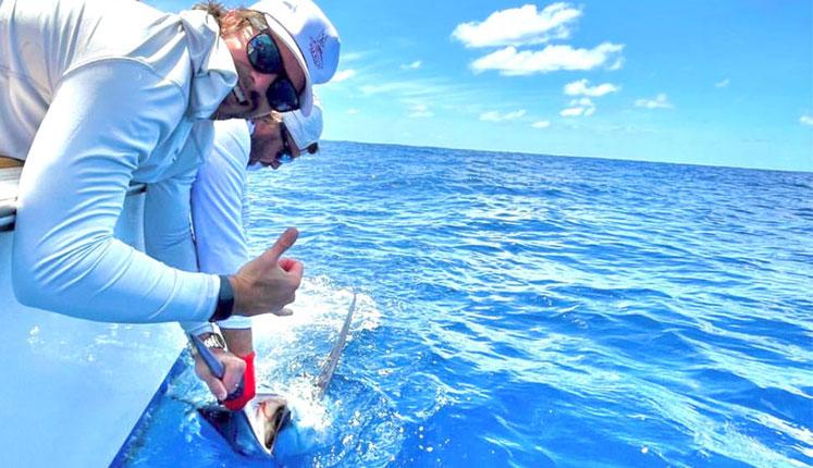 blue-marlin-vs-wolfe-pack-zacatak-lures-image.jpg