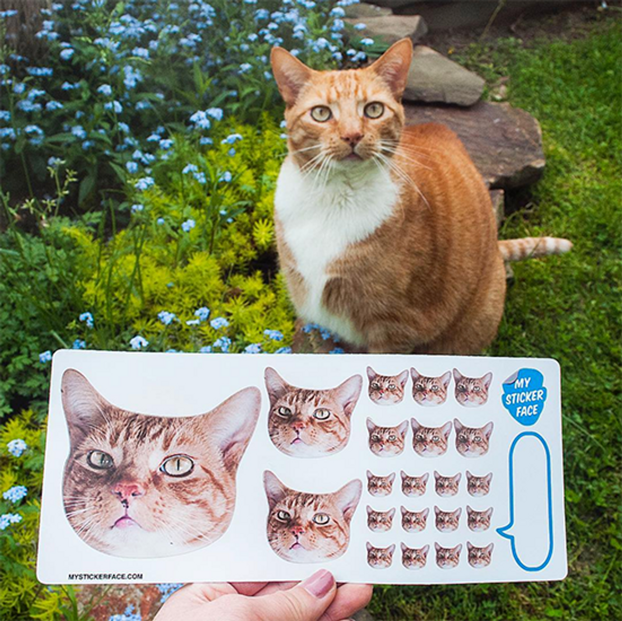 Sampler Face Sticker Sheet - 5 Pack