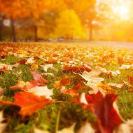 Fall is in The Air: Fall Learning Ideas