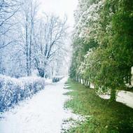 Winter Reset: Spring Renewal