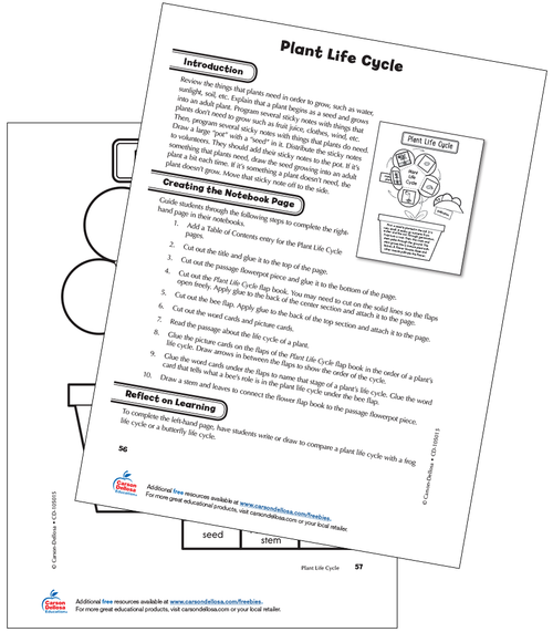 Plant Life Cycle Grade 2 Free Printable