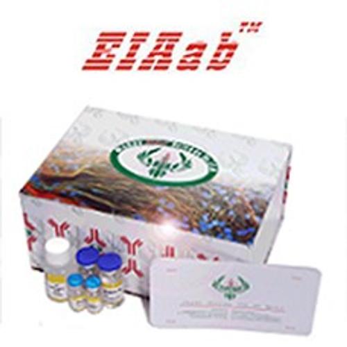 General P4/Progesterone ELISA Kit