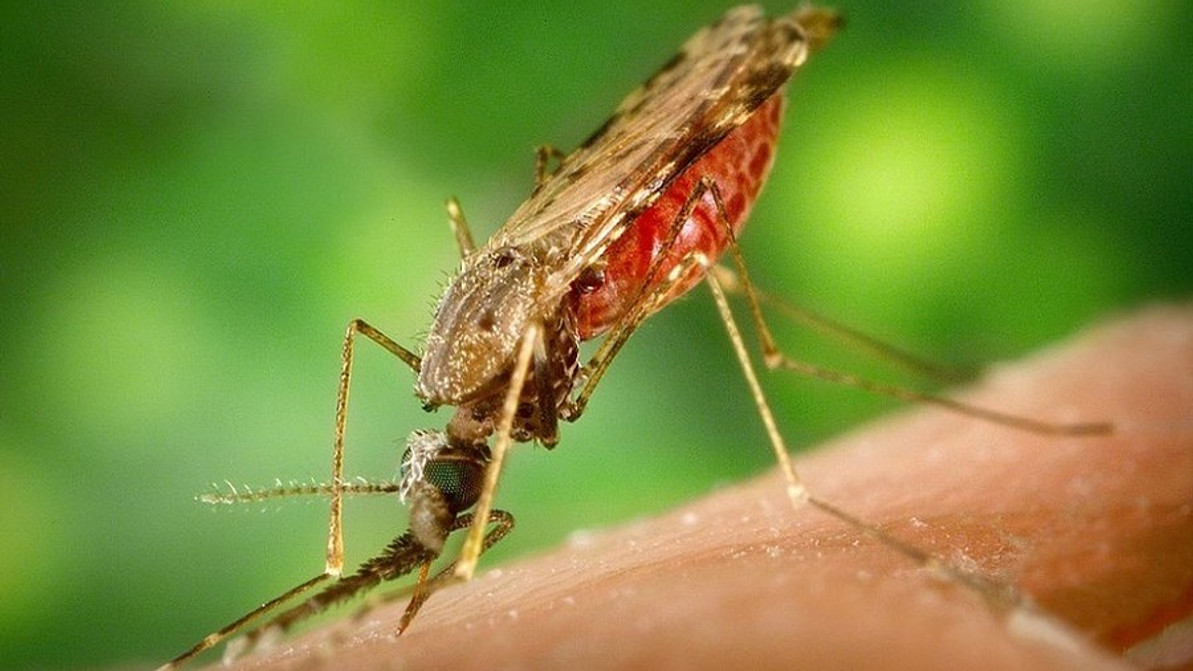 West Nile Virus Linked to Meningitis Cases