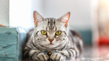 Daring entrepreneurs may simply be driven by mind-altering cat parasite – study
