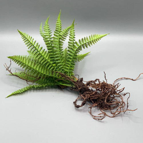 Faux Fern with Roots