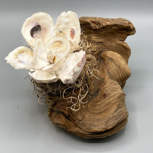 Handmade Oyster Shell Magnolia on Cypress Knee