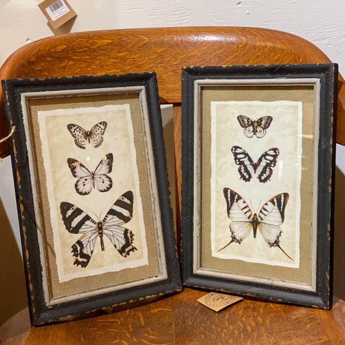 Wood Framed Vintage Reproduction Insect Print, butterfly