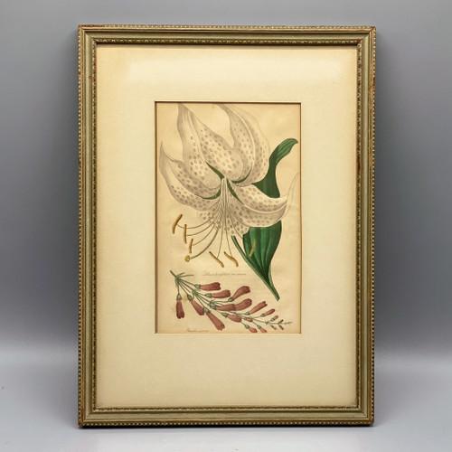 Vintage Lily Botanical Framed Wall Decor