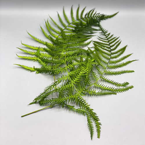 "16"" Dried Natural Fern"