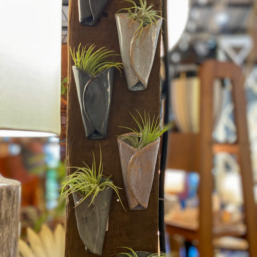 Air Plant + Pottery Cone Vase
