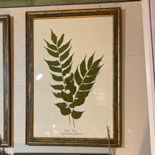 Framed Holly Fern Wall Decor