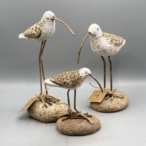 Clay Shore Bird on Rock