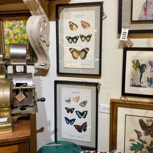Framed Butterflies Print