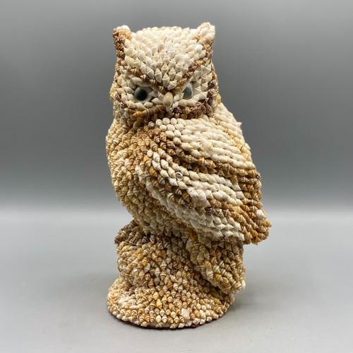 Shell Encrusted Owl