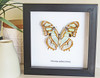 Real butterfly in shadowbox Victorina stelenes Bits & Bugs