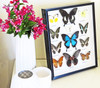 Butterflies framed Bits and Bugs