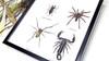 Arachnids spider scorpion Bits & Bugs