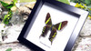 Moth day flying BitsandBugs