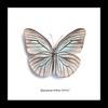 Framed butterflies Pareronia tritea Bits & Bugs