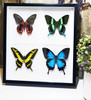 Butterfly collection Bits & Bugs