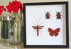 Red insects beetles bugs butterflies Bits & Bugs