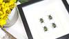 Real beetles in shadow box Mystroceros rouyeri Bits & Bugs