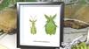Leaf insect Phyllium bioculatum pulchrifolium Bits & Bugs
