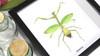 Australian insect Bits & Bugs