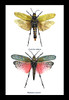 insects grasshoppers taxidermy hoppers bitsandbugs