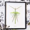 Stick insect framed Eurycnema versirubra Bits & Bugs